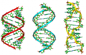 A-B-Z-DNA_Side_View
