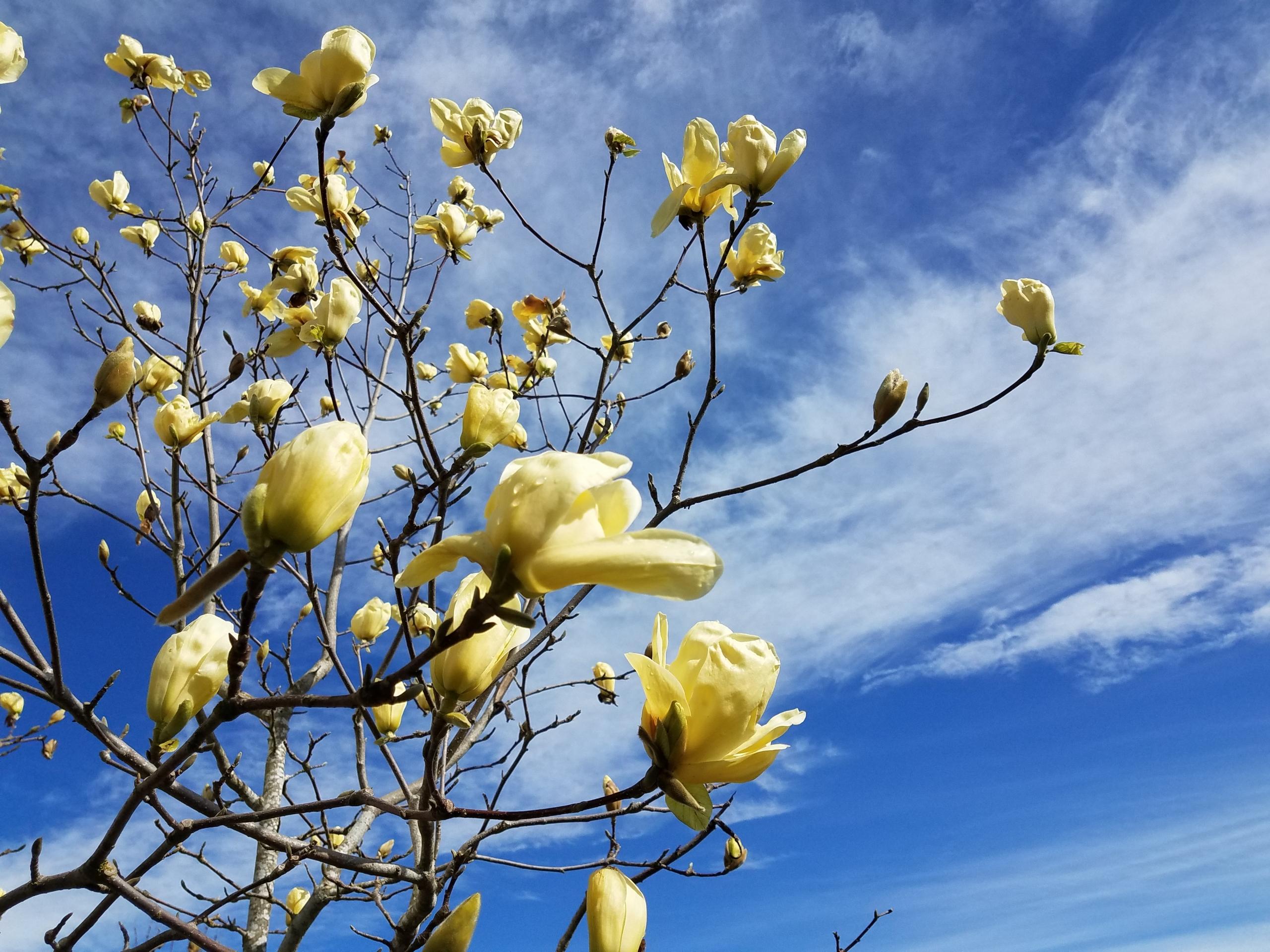 Faith And Magnolia Trees Navigating Discipleship